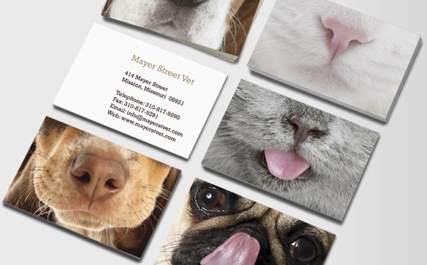Pet Care & Veterinarian Business Cards | Animal Care & Vets | MOO ...