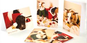 Greyhound Holiday Cards
