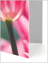 Thick Greeting Card paper stock