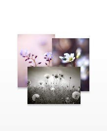 Postcard designs - Natural Delight