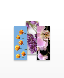 Preview image of MiniCard design 'Bloomin' Lovely'