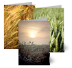 Fields of Joy, Greeting Cards