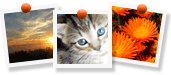 Upload your own photos or choose from MOO designer images